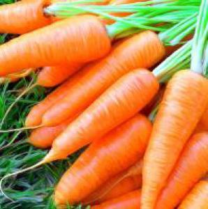 Применение в народной медицине моркови