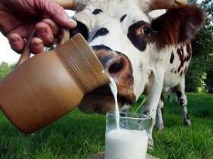 Источники белка: что лучше