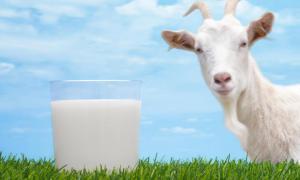 Козье молоко: полезные свойства и противопоказания
