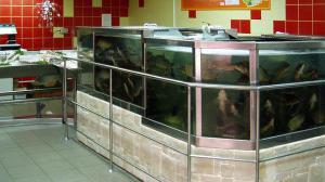 Эксперт: В супермаркетах лучше не покупать живую рыбу