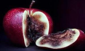 Специалисты рассказали о микотоксинах, которые появляются на фруктах
